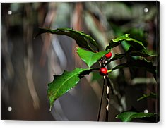 Acrylic Print featuring the photograph Natural Holly Decor by Bill Swartwout