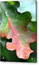 Natural Oak Leaf Abstract Acrylic Print by Maria Urso