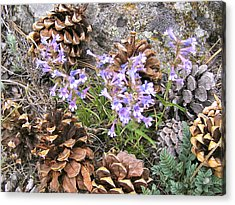 Natural Recycling Acrylic Print