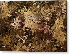 Naturaleaves - Gla02f Acrylic Print by Variance Collections