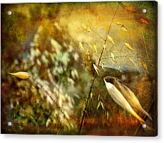 Acrylic Print featuring the photograph Nature #13. Calling You by Alfredo Gonzalez