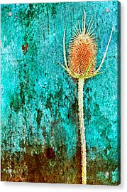 Acrylic Print featuring the digital art Nature Abstract 13 by Maria Huntley