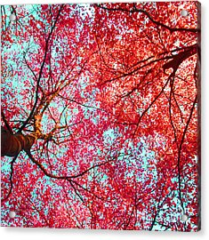 Abstract Red Blue Nature Photography Acrylic Print by Artecco Fine Art Photography