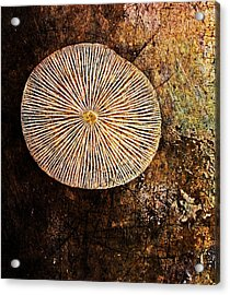 Acrylic Print featuring the digital art Nature Abstract 22 by Maria Huntley