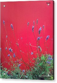 Nature And The City Acrylic Print