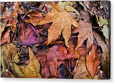 Nature  Acrylic Print by Andrew Raby