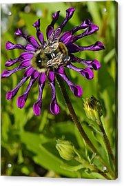 Nature At Work Acrylic Print