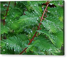 Nature - Beautiful And Simple Acrylic Print