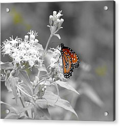 Nature Blessing Acrylic Print by David  Norman