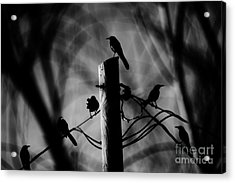 Acrylic Print featuring the photograph Nature In The Slums by Jessica Shelton