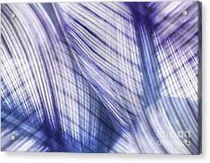 Nature Leaves Abstract In Blue And Purple Acrylic Print by Natalie Kinnear