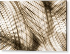 Nature Leaves Abstract In Sepia Acrylic Print by Natalie Kinnear