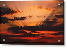 Nature Light Show Acrylic Print by Tony Reddington
