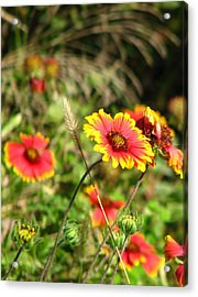 Nature Acrylic Print by Peggy Burley
