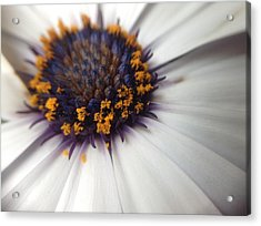 Acrylic Print featuring the photograph Nature Photography 11 by Gabriella Weninger - David