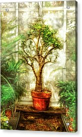 Nature - Plant - Tree Of Life  Acrylic Print by Mike Savad
