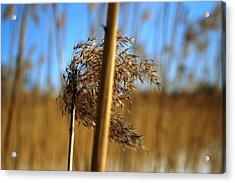 Nature Series 1.1 Acrylic Print by Derya  Aktas