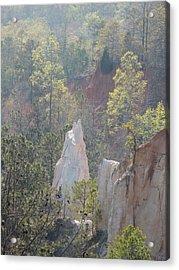 Nature Struggles Acrylic Print by Kim Pate
