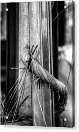 Nature Takes Over In Black And White Acrylic Print by Greg Mimbs