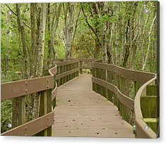Acrylic Print featuring the photograph Nature Walk by Rosalie Scanlon