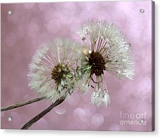 Nature Wish Acrylic Print by Krissy Katsimbras