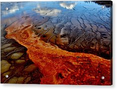 Acrylic Print featuring the photograph Natureprint by Benjamin Yeager