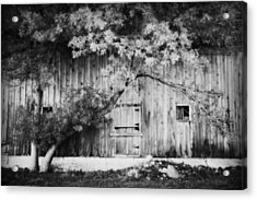 Natures Awning Bw Acrylic Print by Julie Hamilton