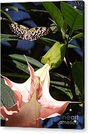 Nature's Beauty Acrylic Print by Brigitte Emme