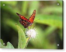 Natures Beauty Acrylic Print