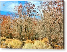 Natures Beauty Acrylic Print by Marilyn Diaz