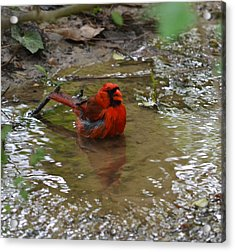 Natures Bird Bath Acrylic Print by Joe Bledsoe