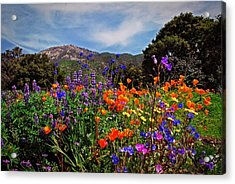 Nature's Bouquet  Acrylic Print