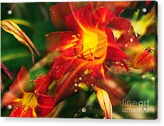 Natures Color Fury Acrylic Print by John Rizzuto