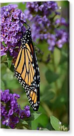 Nature's Color Match Acrylic Print