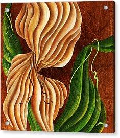 Nature's Curves Acrylic Print
