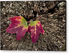 Natures Detail Acrylic Print by Cindy Rubin