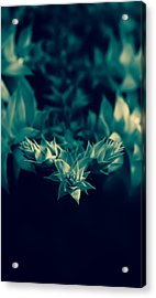 Nature's Directions - Green Acrylic Print
