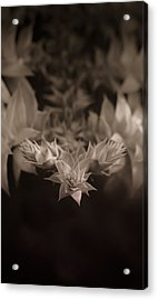 Nature's Directions - Sepia Acrylic Print