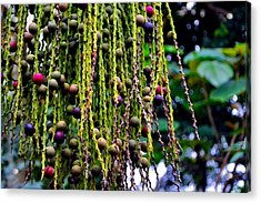 Acrylic Print featuring the photograph Nature's Dreadlocks by Zafer Gurel