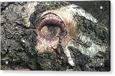 Natures Eye  Acrylic Print by Tom Salt