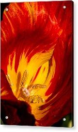 Nature's Flame Acrylic Print