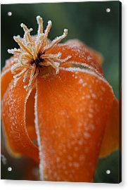Natures Frost Acrylic Print