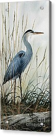 Natures Gentle Stillness Acrylic Print by James Williamson