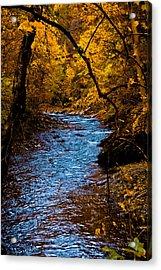 Natures Golden Secret Acrylic Print