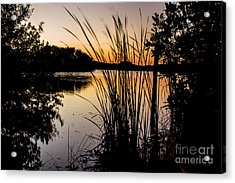 Natures Hidden Beauty Acrylic Print by Rene Triay Photography
