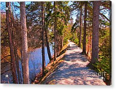 Natures Highway Acrylic Print by John Malone