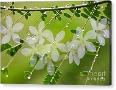 Nature's Jewelry Acrylic Print by Darla Wood