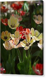Natures Joy Acrylic Print by Randy Pollard