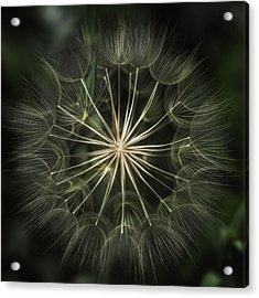 Acrylic Print featuring the photograph Nature's Kaleidoscope  by Kristal Kraft