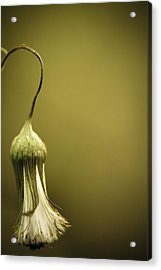 Nature's Little Lamp Acrylic Print by Shane Holsclaw